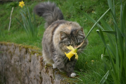 Maisie smelling a daffodil