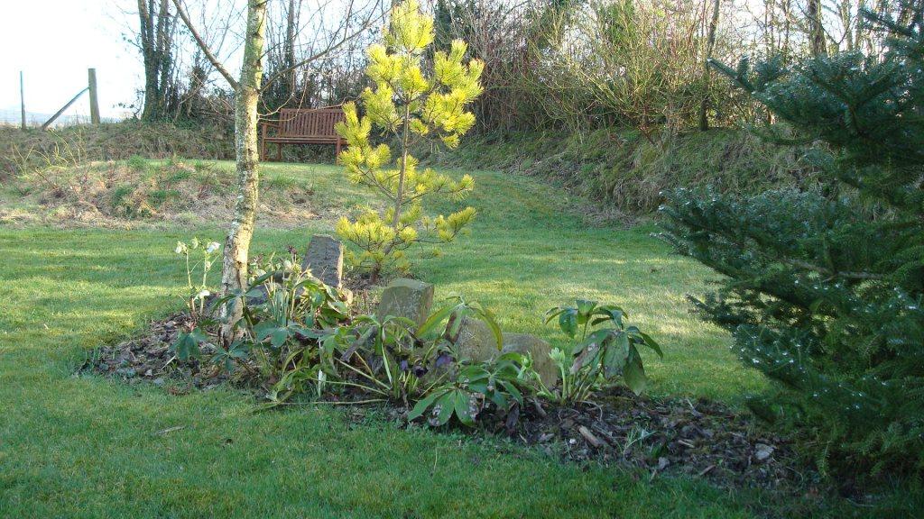 09-feb-our-garden-005