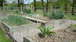 Veg plot. Potatoes getting dug up by unknown mammal! Leeks and purple sprouting nearly finished.