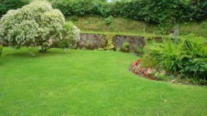 The other hebe at the other end of Lletty Cottage garden