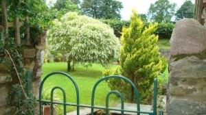 The same hebe through the garden gate