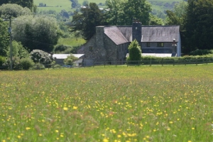 Meadow in flower just waiting for the farmer to make hay