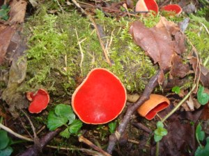 A fungus in the wood...such a brilliant colour