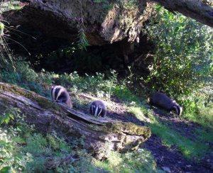 2014 july chris flint badger 2