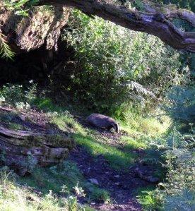 2014 july chris flint badger