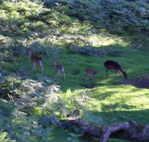 2014 july chris flint deer
