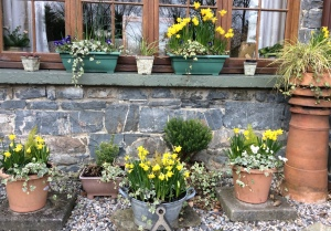 Spring bulbs springing in morning sunshine!