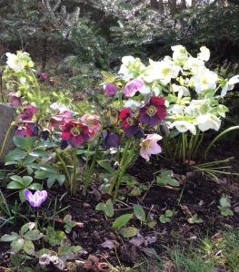 2015 march garden 050-1