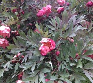 2015 may twins garden visit reunion 187-1