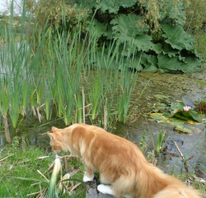 Trying to catch dragon flies